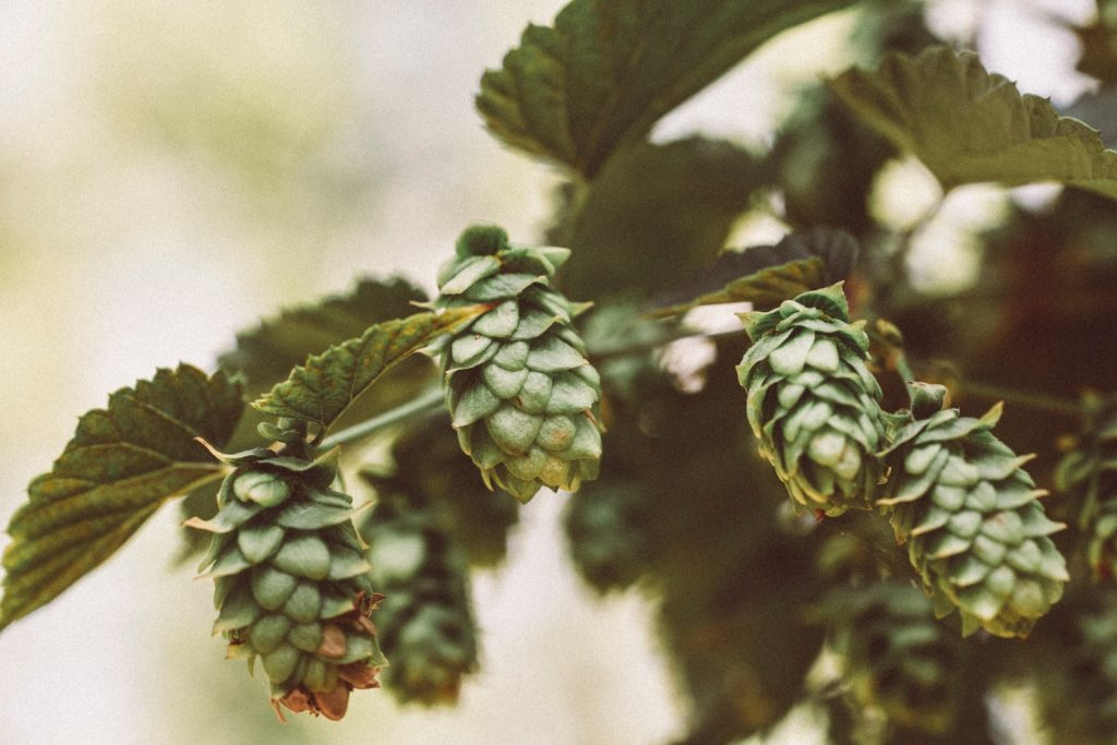 Ludlow Brewery - Award-Winning Beer Hops - Brewery Tours UK